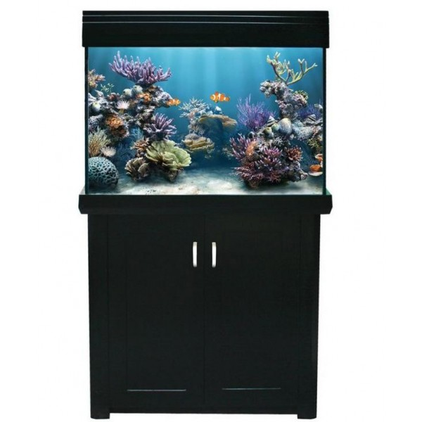 Picture of Living Reef 300 UPGRADED
